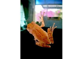 Window frog