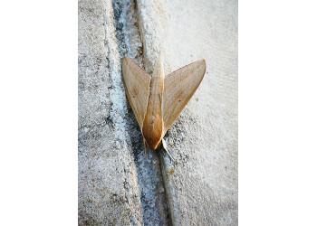 Butterfly in Chakphong